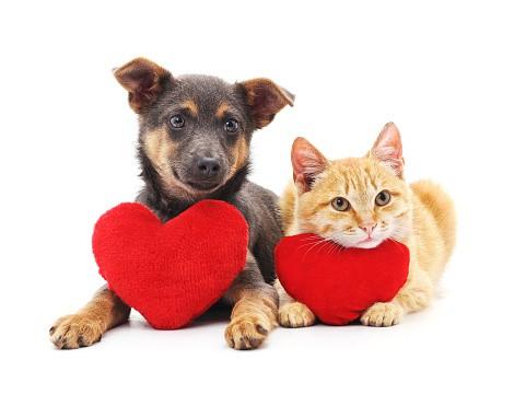 ValentinesGettyImages-1091878344